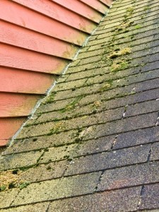 Algae-rooftop-shingles-inspection